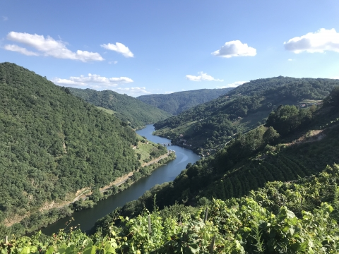 Coordination of the nomination dossier form for the application of Ribeira Sacra to UNESCO World Heritage list
